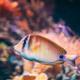 Kole Tang Or Spotted Surgeonfish Or Goldring Surgeonfish Or Yellow-eyed Tang Fish Ctenochaetus - PhotoDune Item for Sale