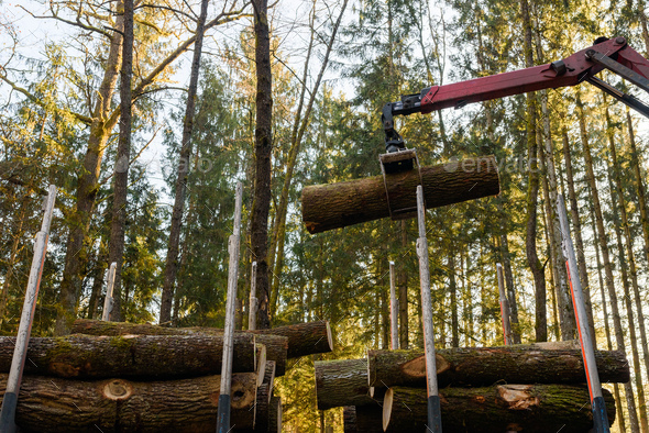 Crane in forest loading logs in the truck. Timber harvesting and transportation in forest - Stock Photo - Images