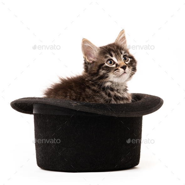 Little kitten sitting in a hat isolated on white background - Stock Photo - Images