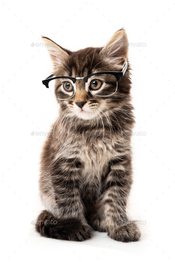 Little kitten isolated on white background. Funny kitten cat - Stock Photo - Images