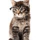 Little kitten isolated on white background. Funny kitten cat - PhotoDune Item for Sale