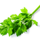 Fresh  celery leaves (Apium graveolens) isolated w clipping paths, top view - PhotoDune Item for Sale