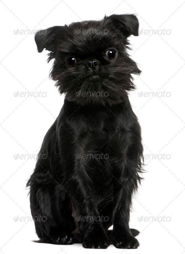(1 year old) - Stock Photo - Images