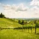 Austria, Slovenia Vineyards Sulztal Herzerl Straße - PhotoDune Item for Sale