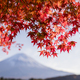 Mt. Fuji in autumn on sunrise at lake Kawaguchiko, Japan - PhotoDune Item for Sale