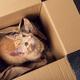 Cute ginger kitten sleeps - PhotoDune Item for Sale