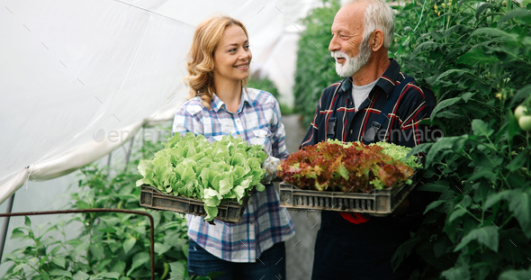 Family growing organic vegetables and healthy food at farm, greenhouse - Stock Photo - Images