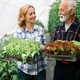 Family growing organic vegetables and healthy food at farm, greenhouse - PhotoDune Item for Sale