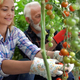 Family working together in greenhouse. Healthy organic food concept - PhotoDune Item for Sale