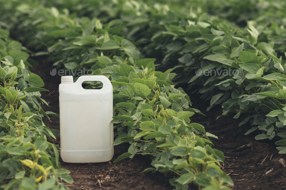 Soybean crop protection concept - Stock Photo - Images