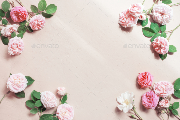 Tender Background with Pink Roses and Sunlight - Stock Photo - Images