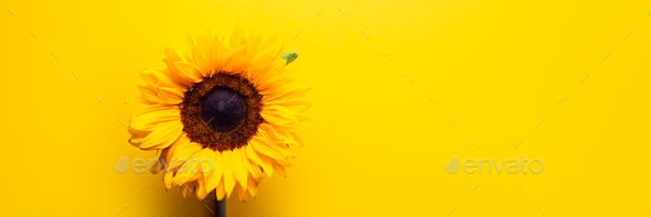 Yellow Sunflower Bouquet - Stock Photo - Images