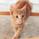 Cute ginger kitten sits - PhotoDune Item for Sale