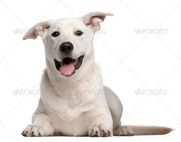 Mixed-breed (10 years old), Mixed-breed puppy (5 months old) - Stock Photo - Images