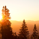 Pine tree crowns over hills and valley background with bright golden sunset above - PhotoDune Item for Sale