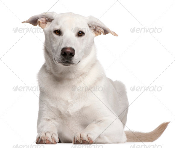 Mixed-breed puppy (5 months old) - Stock Photo - Images