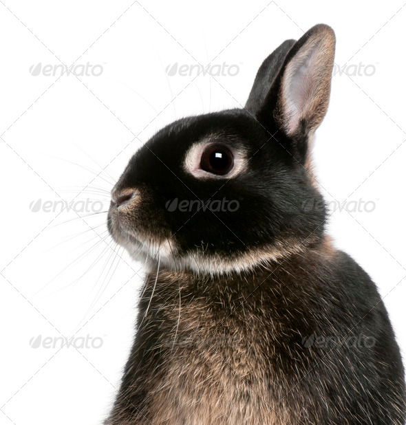 Close-up of rabbit in front of white background - Stock Photo - Images