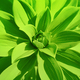Green plant background - PhotoDune Item for Sale