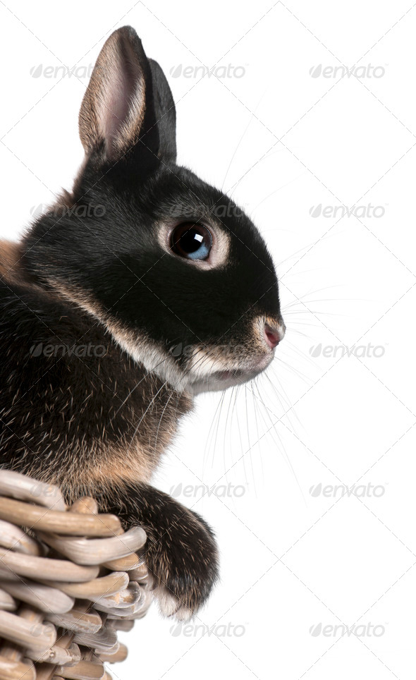 Rabbit sitting in basket in front of white background - Stock Photo - Images