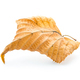 Yellow autumn leaf - PhotoDune Item for Sale