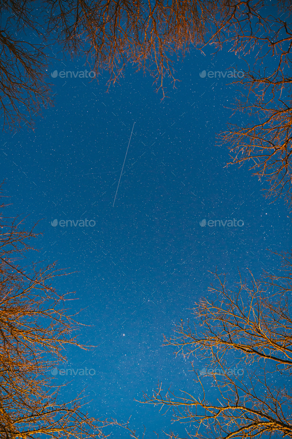 Night Sky Stars Above Oak Trees Branches In Early Spring. Natural Starry Sky Above Woods. Night Sky - Stock Photo - Images