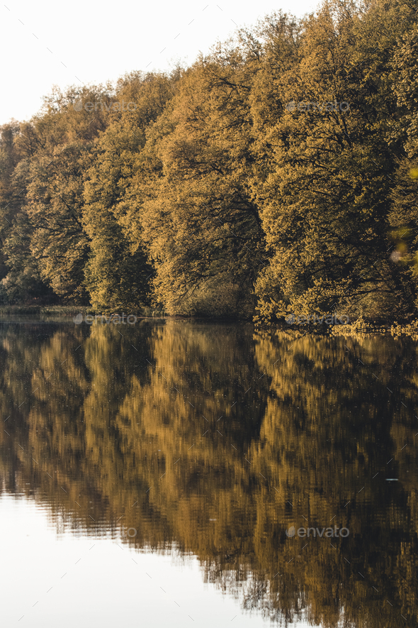 Beautiful landscape. Forest on the lake - Stock Photo - Images