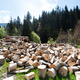 Firewood on field in front of forest - PhotoDune Item for Sale