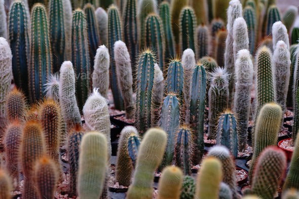 Lots of cactus in the garden shop - Stock Photo - Images