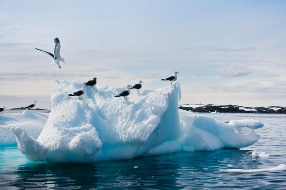 Seagulls in Antarctica - Stock Photo - Images