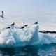 Seagulls in Antarctica - PhotoDune Item for Sale