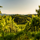 Austria, south styria vineyards travel destination. Tourist spot for vine - PhotoDune Item for Sale