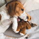 Cute Beagle dog on sofa with teddy bear on sofa. - PhotoDune Item for Sale
