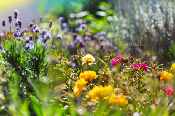 Flowers in garden - Stock Photo - Images
