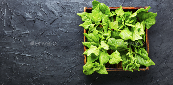 Fresh spinach leaves - Stock Photo - Images