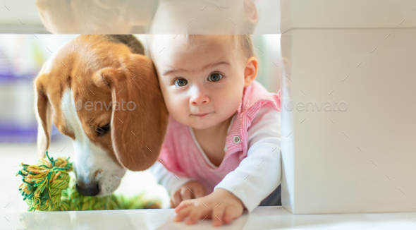 Little baby girl with her dog crawl into tight space under coffee table - Stock Photo - Images