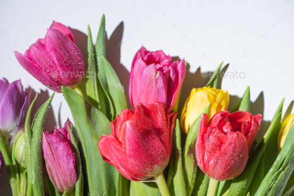Bouquet of Colorful Spring Tulips With Water Drops on White Background - Stock Photo - Images