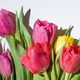 Bouquet of Colorful Spring Tulips With Water Drops on White Background - PhotoDune Item for Sale