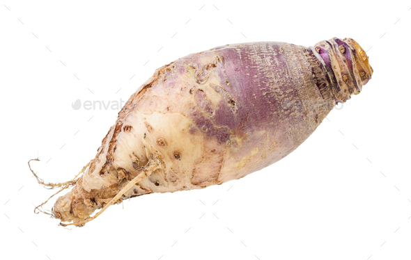 fresh rutabaga root isolated on white - Stock Photo - Images