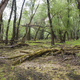 Forested marshland with fallen and decaying trees - PhotoDune Item for Sale