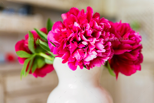 Bouquet of blossoming fuchsia peony in spring - Stock Photo - Images