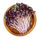 Red leaved radish seedlings in wooden bowl - PhotoDune Item for Sale