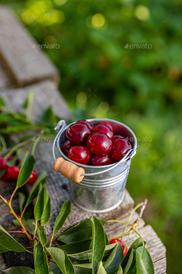 Delicious sour cherries - Stock Photo - Images