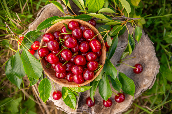 Fresh ripe juicy sour cherries - Stock Photo - Images
