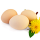 Eggs with dandelions - PhotoDune Item for Sale