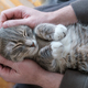 Cute contented cat sleeps on its back, bending its paws in the arms of its owner. Top view. - PhotoDune Item for Sale