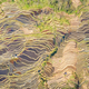 aerial view of beautiful lines of terraced fields - PhotoDune Item for Sale