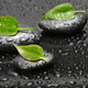 Green leaf and Black stones with drops. - PhotoDune Item for Sale