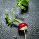 Fresh radishes with water drops - PhotoDune Item for Sale