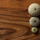 Violet Sea Urchin (Echinoderm) with Seashells on a Dark Wooden Background - PhotoDune Item for Sale