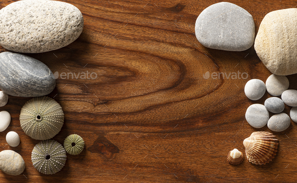 Violet Sea Urchin with Seashells and Pebbles on a Wooden texture - Stock Photo - Images